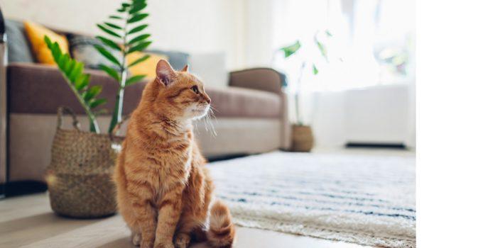 Top 5 des aliments préférés des chats